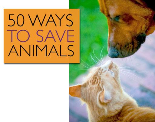 50 Ways to Save Animals | JustGive