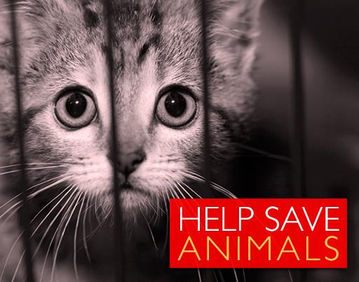 blog_title_image_animal_cruelty