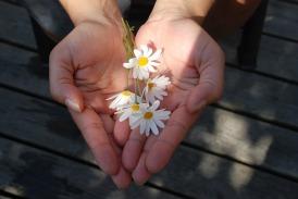flower-22656_640-pixabay