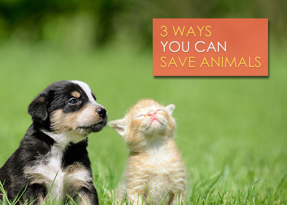 blog_title_image_save_animals