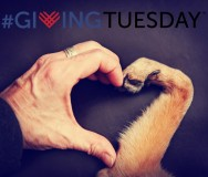 giving-tuesday-with-heart